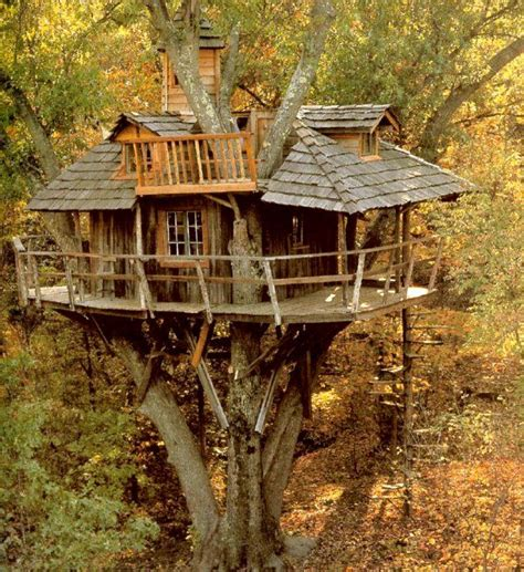 live in tree house pictures tree houses future home pinterest tree houses