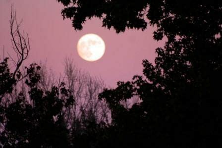 Gardening By The Moon by The Benefits Of Moon Gardening