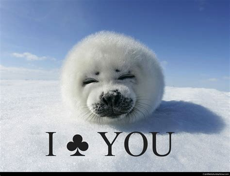 Baby Seal Meme - pin clubbing seals meme image search results on pinterest
