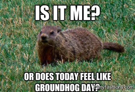 groundhog day jokes pictures groundhog day meme images 2016 2017 b2b fashion