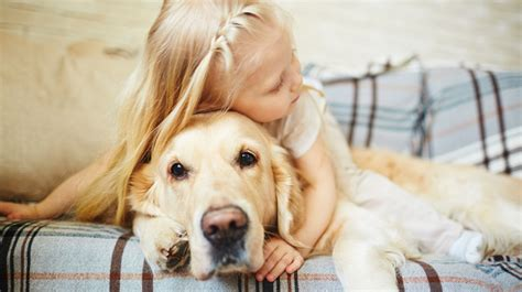 top dog breeds top 10 dog breeds 2016