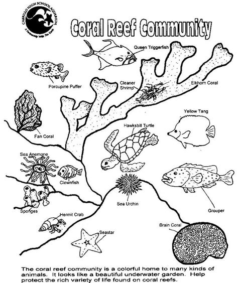 ocean plants coloring pages adults coral colors coral