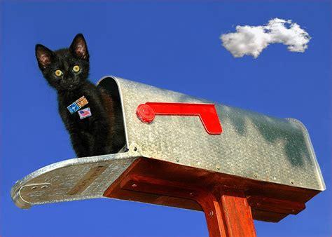 Brief B4 Schweiz die katze auf dem hei 223 en blech briefkasten reload