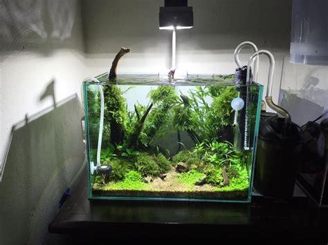 mini aquascape  edgar emmanuel alatorre pin  aqua