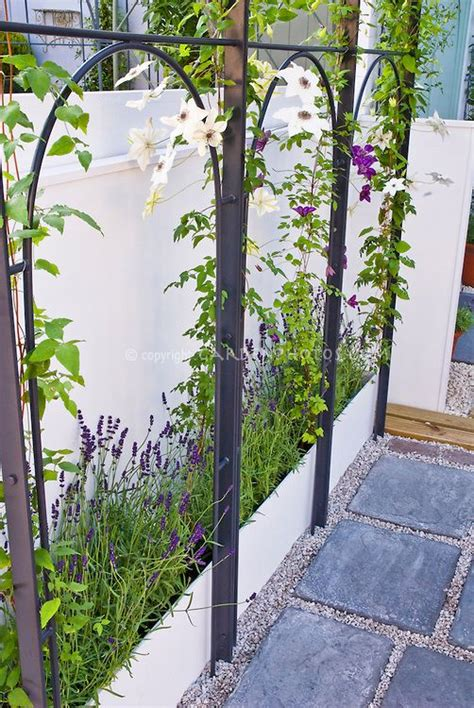 climbing plants for walls best 25 clematis trellis ideas on vine yard