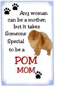 pomeranian quotes i my pomeranian jakey pom pomeranians and animal