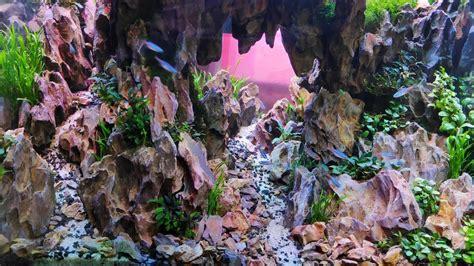 konsep aquascape akar  batu akarkua