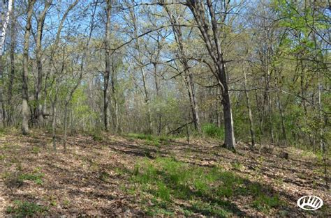 Wisconsin Property Sales Records All Wooded Property For Sale In Western Wi Whitetail Properties
