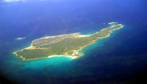 island puppies islands for sale island anguilla caribbean