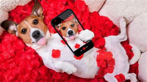 valentines puppy is your your real