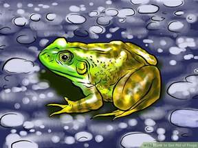 How To Catch A Frog In Your Backyard by 60 How To Catch A Frog In Your Backyard Frogs Are