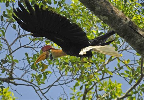 sulawesi birds