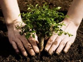 midtown tree planting midtown neighbors association