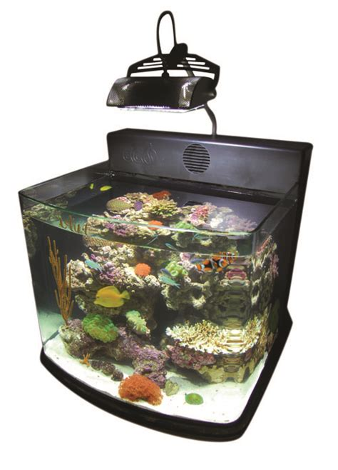 Lu Metal Halide Aquarium metal halide ecosystem aquarium