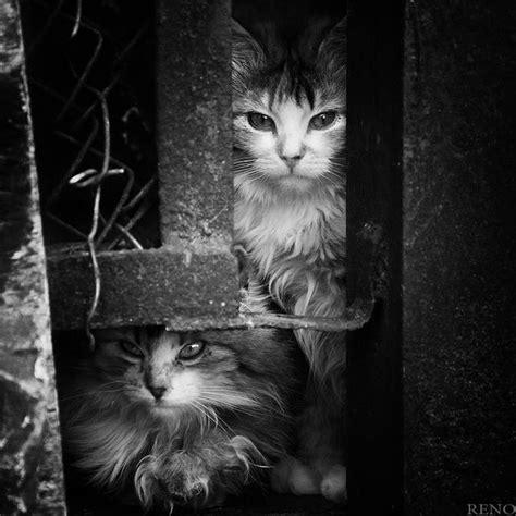 imagenes lindas en blanco fotos bonitas en blanco y negro