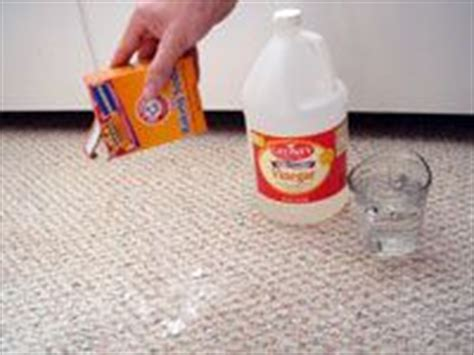 rug doctor cat urine cat urine on cleaning cat urine cat urine remover and cat urine smells