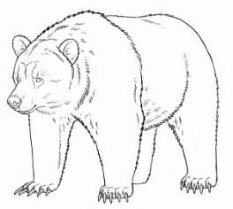 how to draw grizzly bears step by step forest animals