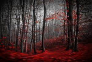 red carpet forest wall mural red carpet forest wallpaper enchanted forest wallpaper mural for living room