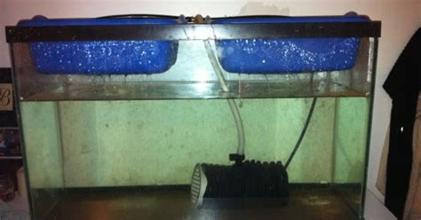 beach family homestead indoor aquaponics