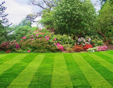 grasshopper lawns scranton wilkes barre lawn care