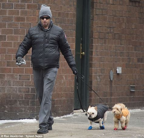 dogs walking in shoes hugh jackman takes his two dogs for a walk in tiny snow boots daily mail