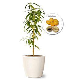 wholesale fruit tree nursery 1000 images about buy wholesale plants on