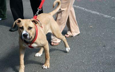 Englischer Garten Hunde Leinenpflicht by Hund Katze Co Tiere In M 252 Nchen Das Offizielle
