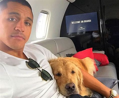 alexis sanchez dogs instagram are arsenal star alexis sanchez s dogs the luckiest in the