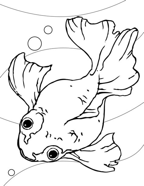 Coloring Page To Print by Free Printable Fish Coloring Pages For
