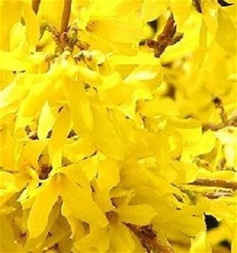 nomi fiori invernali fiori invernali speciali fiori invernali specie
