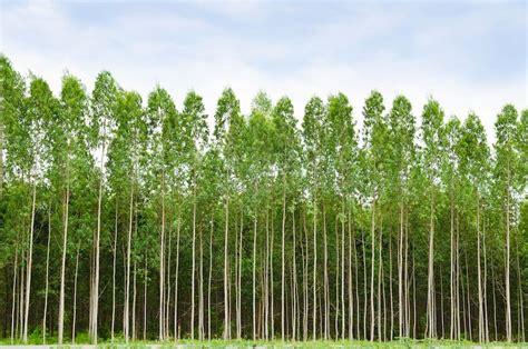 wood   week lyptus dp juza woods fixtures
