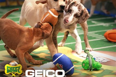 puppy bowl 2015 how to be a puppy bowl expert costumes