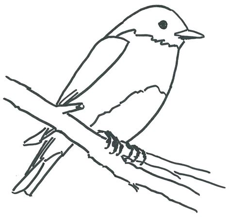 bluebird coloring pages preschool eastern bluebird drawing at getdrawings com free for
