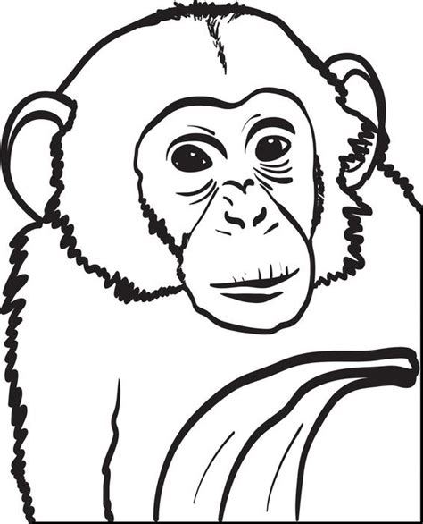 chimpanzee colouring pages