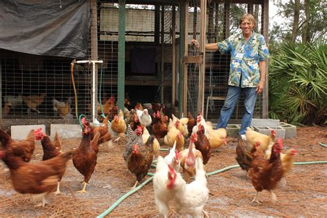 Group Looks To Legalize Backyard Chickens In Winter Park Backyard Chickens In Winter