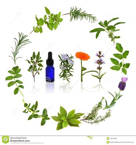 imagenes de flores medicinales charla plantas medicinales con efectos sedantes y