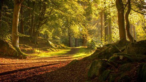 mather nature scotland stone trees landscape