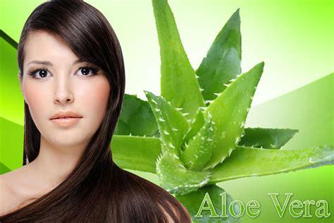 imagenes de tratamientos naturales para el cabello tratamiento para el cabello con sabila y huevo