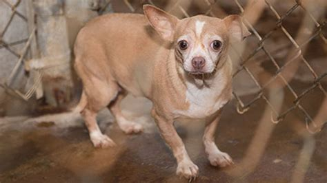 128 animals rescued from suspected puppy mill in