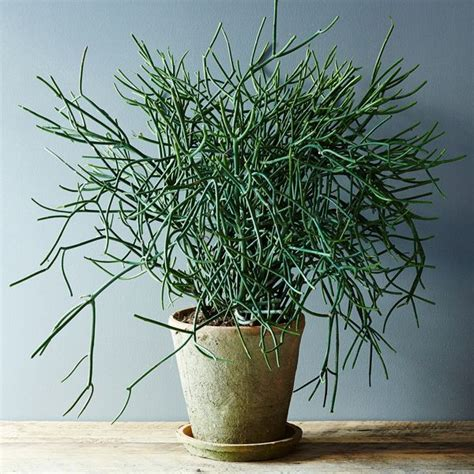 types of indoor plants best 10 types of cactus ideas on pinterest types of