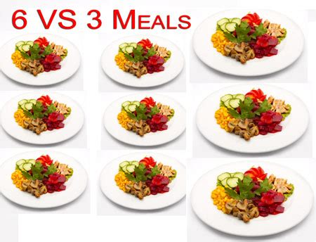 6 protein meals a day 6 meals a day vs 3 which is better