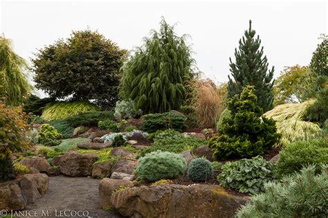 shrubs form and foliage