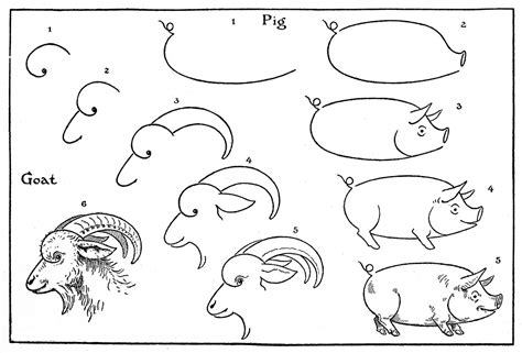 How To Draw Animals Pigs Goats The Graphics