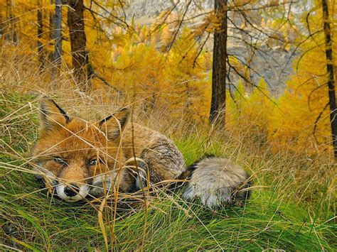 National Geographic Ind Februari 2015 de 20 mooiste natuurfoto s national geographic 2015