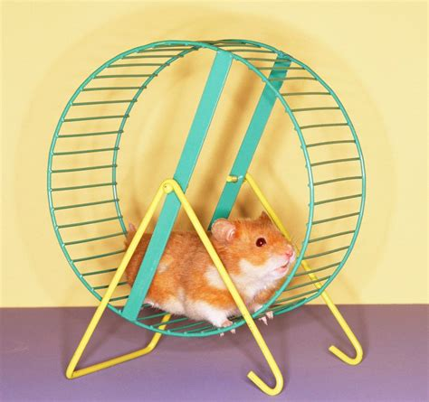 Wheel Kincir Hamster Mainan Hamster this is why i don t look on blue pillers gently