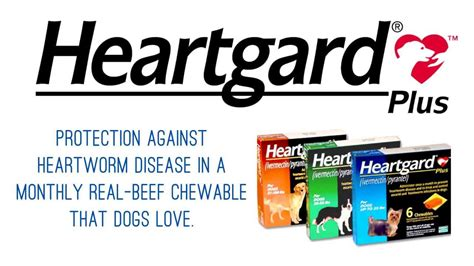 heartworm heartgard plus dogs heartgard plus heartworm preventative for dogs and cats