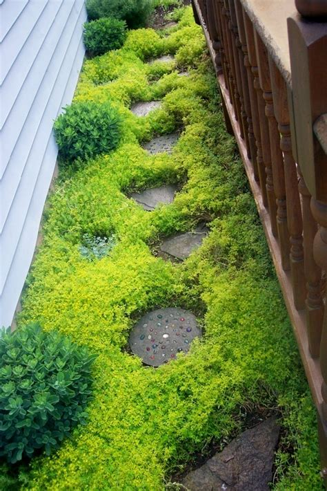 backyard ground cover ideas 32 cheap and easy backyard ideas that are borderline genius