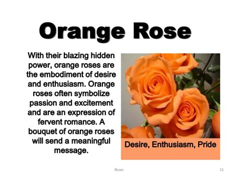 what does orange symbolize meanings of roses weneedfun