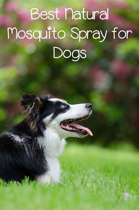 mosquito spray for dogs mosquito spray for dogs a pretty awesome idea dogvills