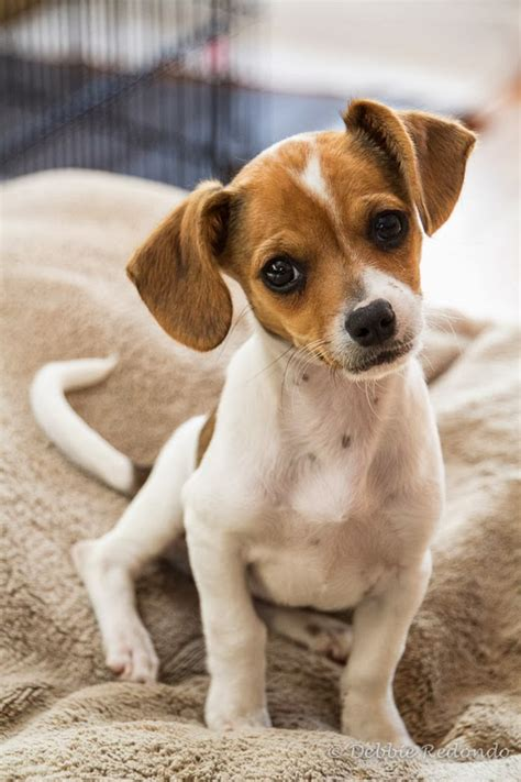 small puppies for adoption clairemont news small adoption event this saturday